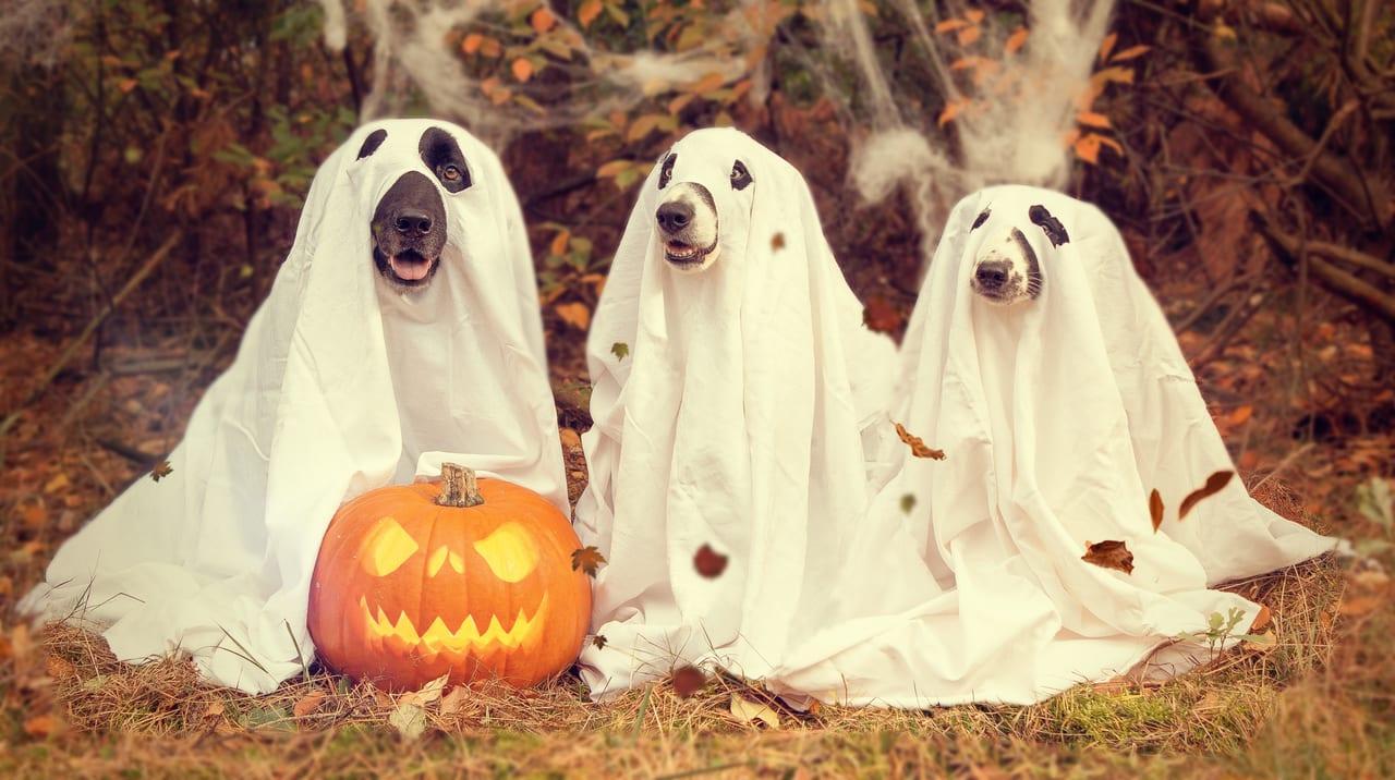 ハロウィンのコスプレした犬